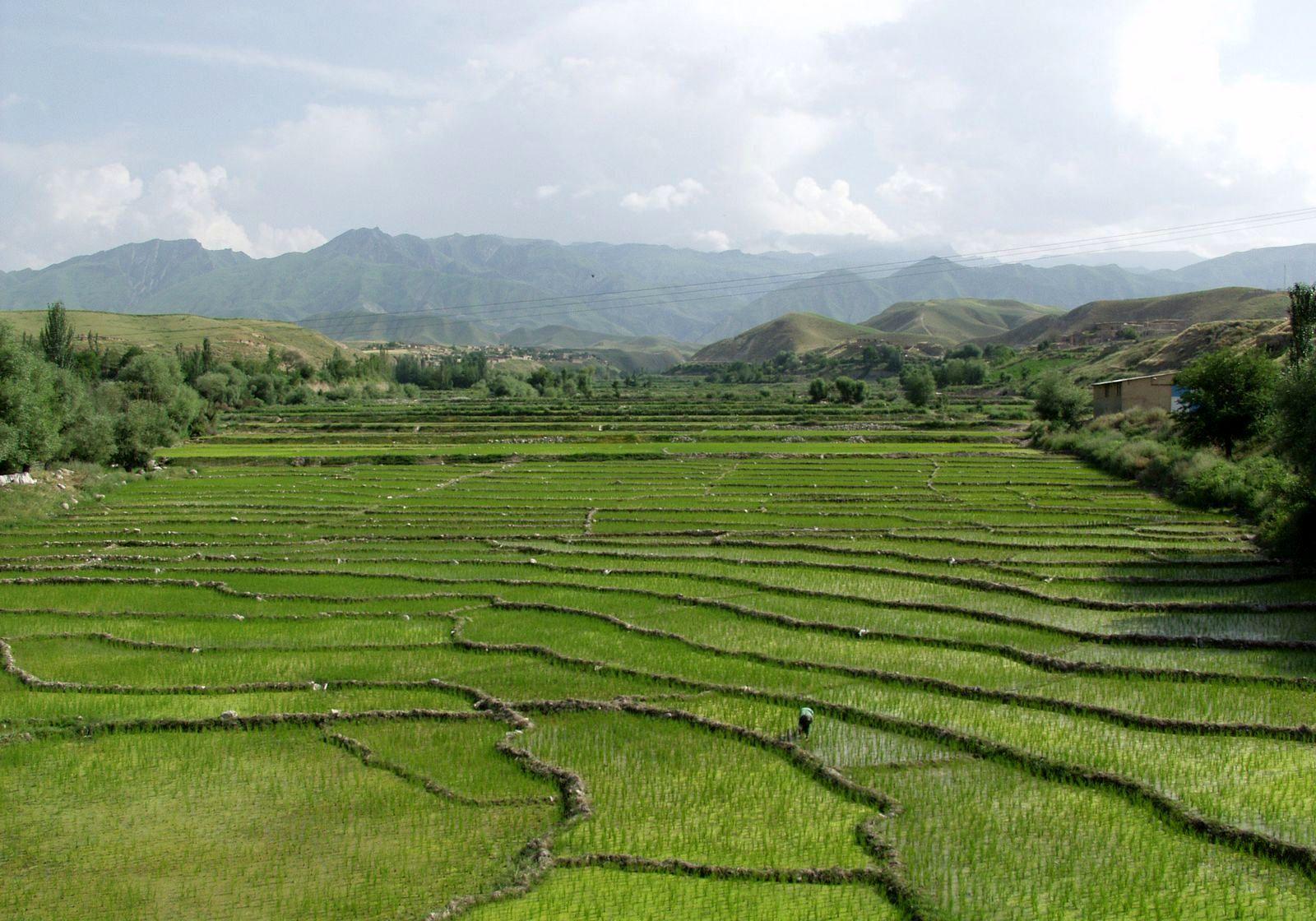 تغییر کاربری زمین کشاورزی